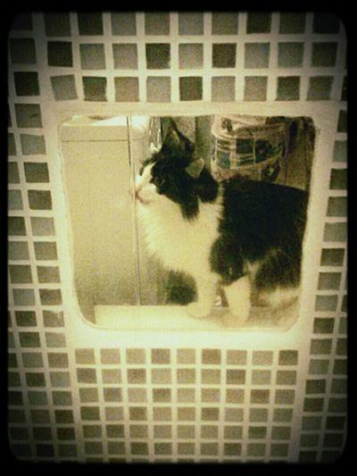 Cat Cat & Water