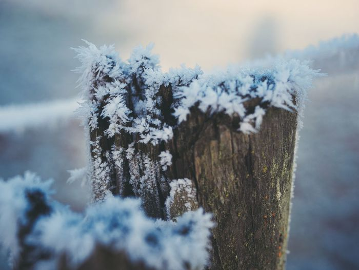 Snow Winter Plant Cold Temperature Nature Day Close-up Frozen No People Beauty In Nature Focus On Foreground Ice Tranquility White Color Covering Outdoors Frost Wood - Material