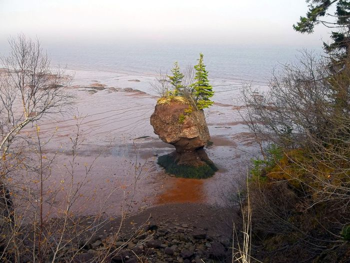 Flowerpot island caused by erosion of tides Rock Rock Island Rock Formation Bare Tree Beauty In Nature Day Flowerpot Island Grass Island Nature No People Outcrop Outdoors Rock Outcrop Scenics Sea Sky Tidal Rock Formations Tranquil Scene Tranquility Tree Tree On Small Island Water