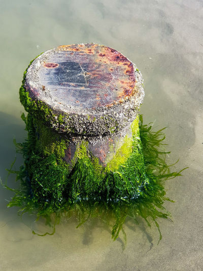 Algae Ocean Pool Sea Algae Water Bollard Water Close-up Blooming Growing Plant Life