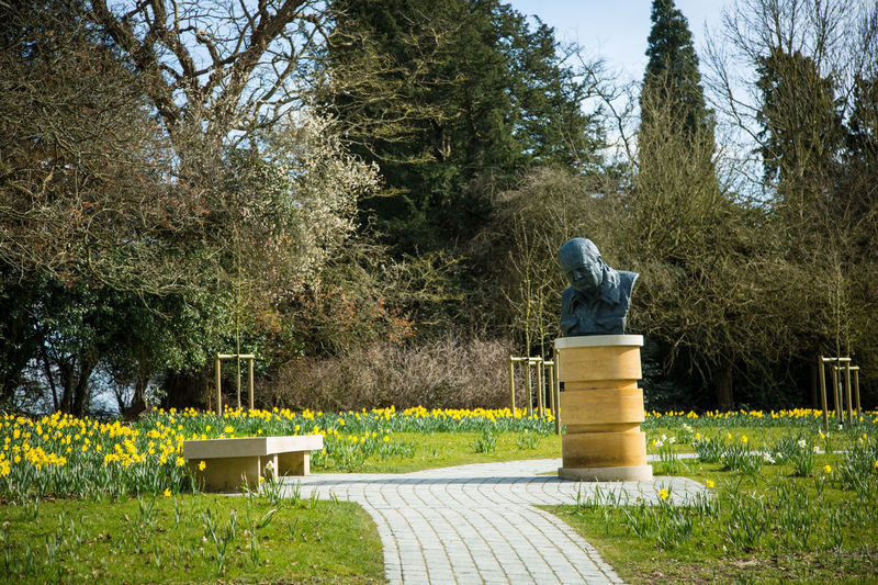 Winston Churchill Beauty In Nature Bench Blenheim Palace Branch Day Grass Grassy Green Color Growth Nature Outdoors Park Park - Man Made Space Park Bench Plant Sky Sunlight Tranquil Scene Tranquility Tree Tree Trunk Winston Churchill
