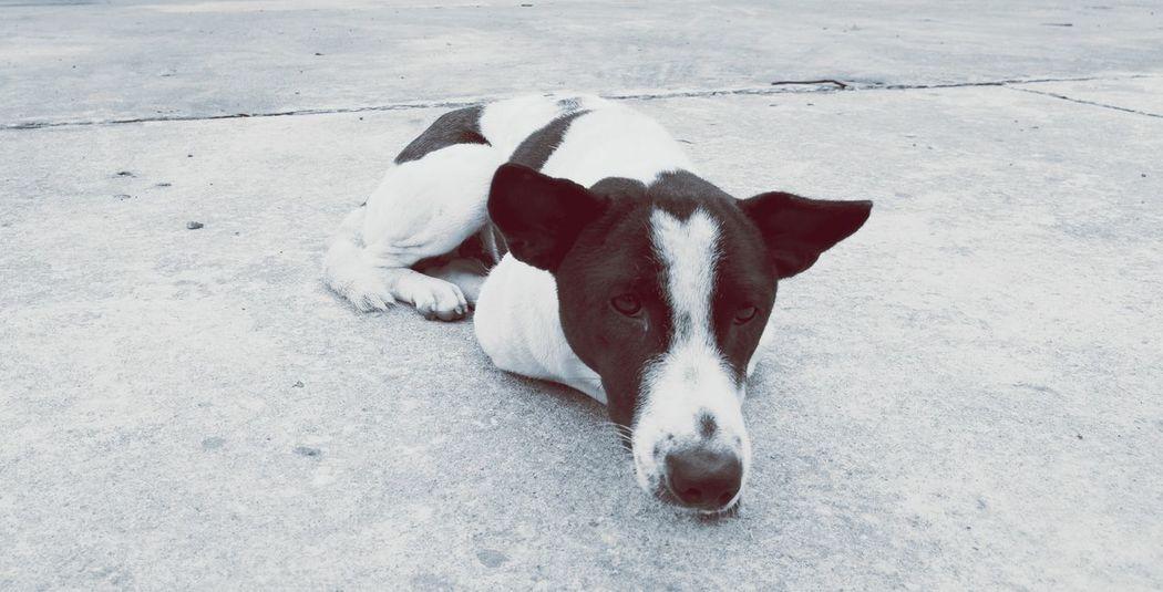 LOOK @ ME Pets Portrait Dog Looking At Camera Close-up