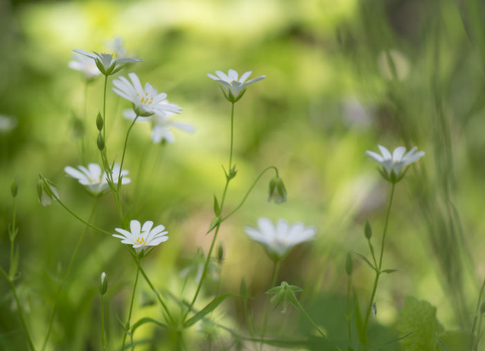Beauty Beauty In Nature Close-up Day Field Flower Flower Head Flowering Plant Fragile Beauty Freshness Green Color Growth Inflorescence Nature No People Outdoors Petal Plant Vulnerability
