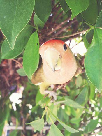 Birds Birdie Pets Birds Of EyeEm  Nature Animals Bird Photography