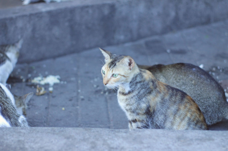 Cat Day Domestic Domestic Animals Domestic Cat Feline Focus On Foreground Looking Looking Away Mammal No People One Animal Outdoors Pets Relaxation Sitting Vertebrate Whisker