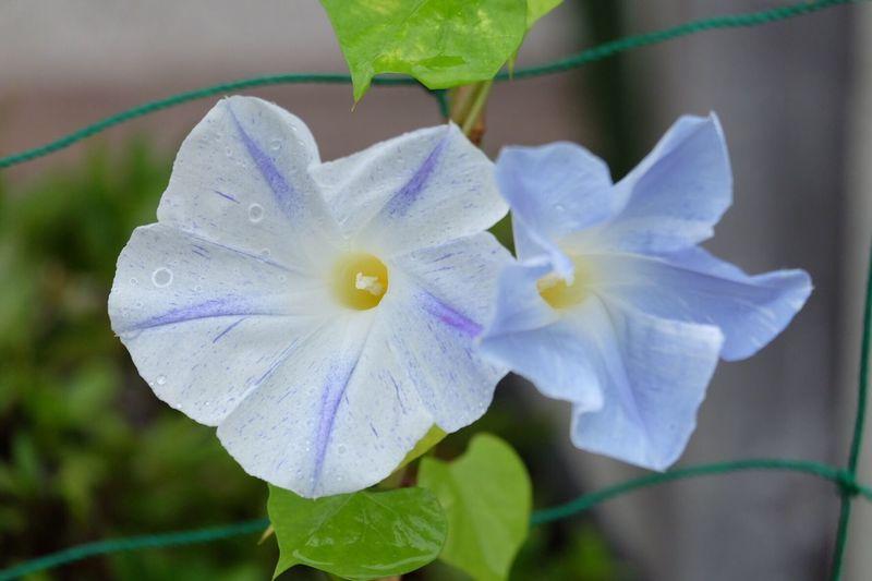 Flower Flower Summer