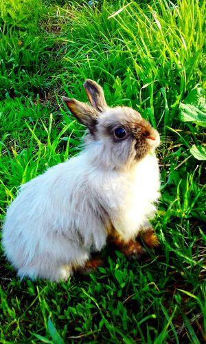 Fresh Day Pets Nature кролик зая заяц