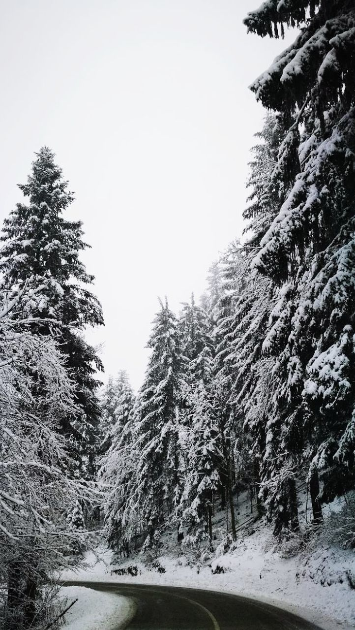 snow, tree, winter, cold temperature, nature, beauty in nature, outdoors, tranquility, no people, day, growth, scenics, sky, landscape, mountain, clear sky