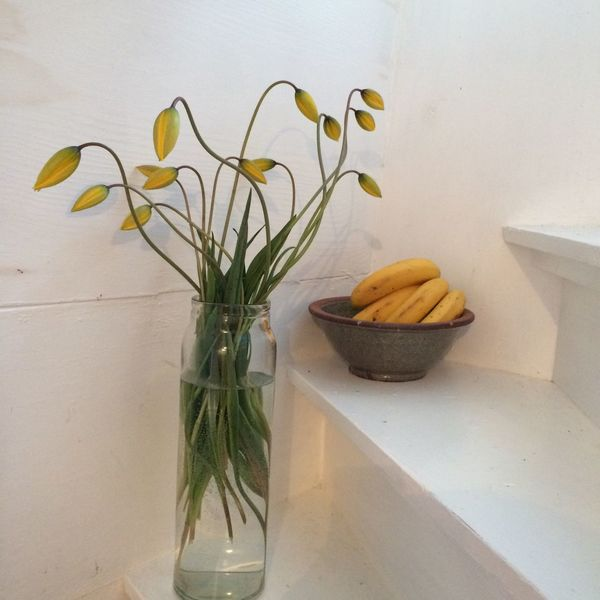 Indoors  Flower Vase No People Yellow Color Frukt