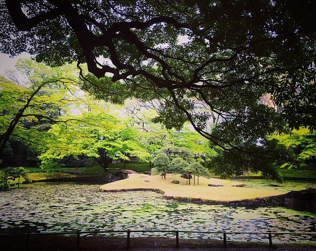 小石川後楽園 小石川 後楽園 飯田橋 Tokyo Enjoying Life