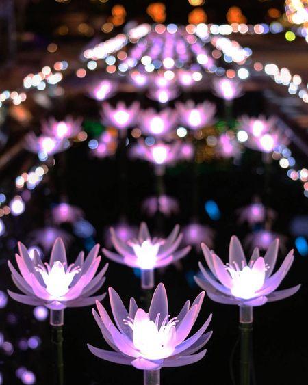 Flower No People Nature Flower Head Defocused Celebration Close-up Freshness Lightup Event Light Effect カメラ女子 カメラ好きな人と繋がりたい 写真撮ってる人と繋がりたい ファインダー越しの私の世界 Japanese Girl Tochigi.japan Garden Night Illuminated Lighting Equipment Waterlily