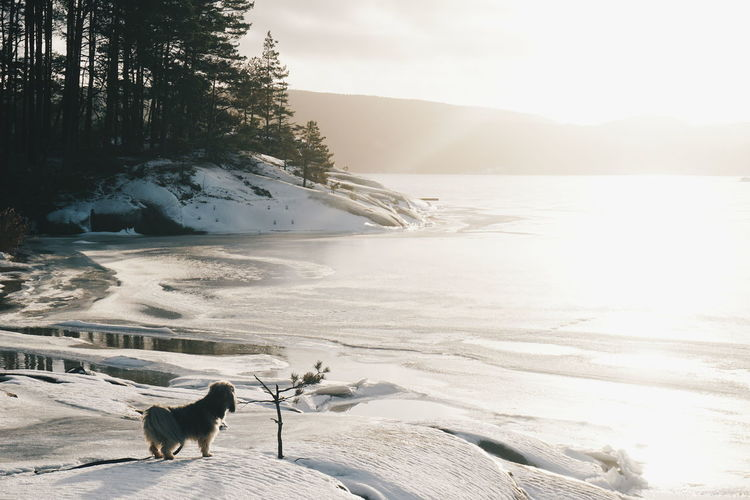 Tree Pets Animal Animal Themes Dog Outdoors Beach Nature No People Domestic Animals Day Mammal Beauty In Nature Scenics Norway Winter Cold Days Ocean Frost Water Tree Landscape Scenery Scenic Sunshine