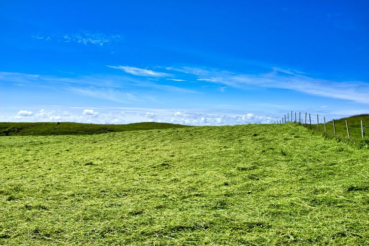 Norway, Haugesund: grass field Day Daylight Daytime Outdoors Grass Field Agriculture Landscape Color Green Green Color Nobody No One No People Plant Sky Tranquility Tranquil Scene Scenics - Nature Land Beauty In Nature Environment Cloud - Sky Blue Nature Non-urban Scene Growth Idyllic