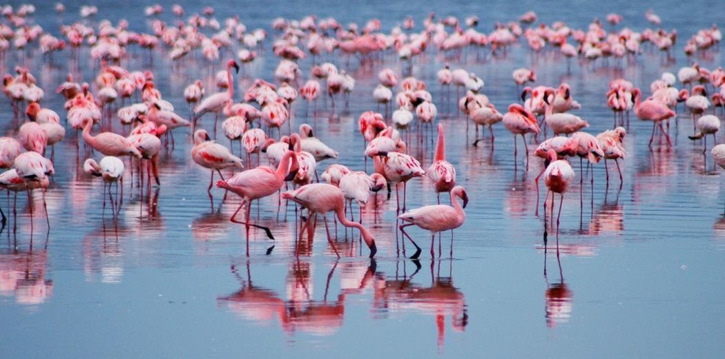 The colour, diversity and vibrancy of Africa is brought to life when confronted by such a beautiful sea of flamingoes!! My Favorite Photo Check This Out Nature Outdoors Outdoor Photography Lake Wildlife Wildlife Photography Flamingo Flamingos Reflection Nature Photography Market Reviewers' Top Picks
