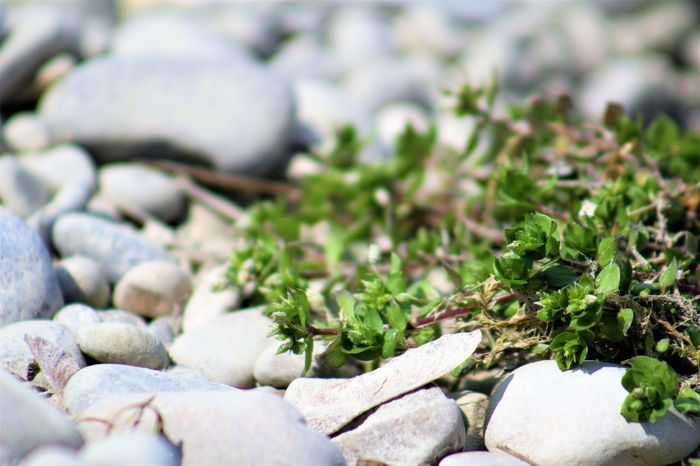Beauty In Nature Close-up Day Freshness Nature No People Outdoors Pebble