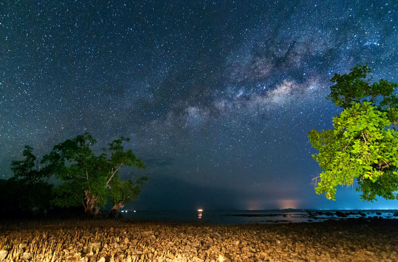 milky way rise above trees Star - Space Night Astronomy Space Galaxy Sky Plant Scenics - Nature Tree Beauty In Nature Milky Way Nature Star Tranquil Scene Star Field Tranquility Land Constellation Science No People Outdoors