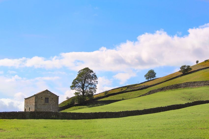 The Great Outdoors - 2016 EyeEm Awards Yorkshire Nature Nature_collection Green Barn Sky Fieldscape Field Landscape_Collection Nature Diversities Stonewall Blue Sky Rural Scene Rural Hill Nature Photography Blue Sky And Clouds Green Pastures Pasture Yorkshire Dales Horizon Over Land