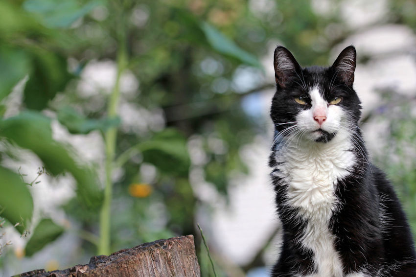Alertness Animal Themes Animals In The Wild Cat Close-up Day Domestic Animals Domestic Cat Feline Focus On Foreground Housecat Looking At Camera Mammal Nature One Animal Pets Portrait Sitting Whisker Wildlife
