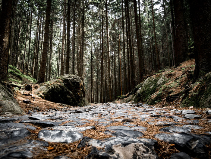 Surface level of stream amidst trees in forest