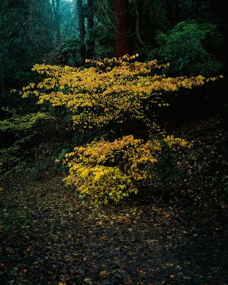 High angle view of yellow flowering trees in forest