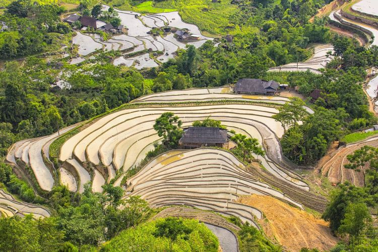 Hoang Su Phi, Ha Giang, Vietnam water season on the terraced fields Agriculture Ancient Civilization High Angle View Landscape Mountain Rice Paddy Terraced Field Travel Destinations