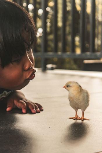 Portrait of boy looking at bird