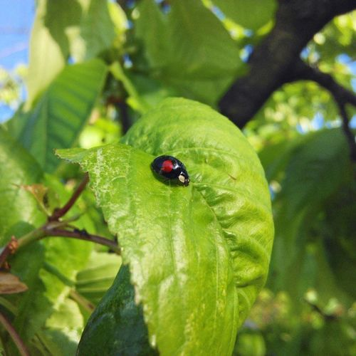 Nofilter Ladybug Phone_o_grapher Photography Garden Insect Instagram
