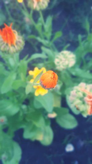 Beauty In Nature Mongolia Khuvsgul Flowers, Nature And Beauty