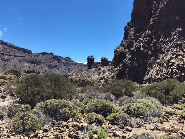 Teide National Park, Tenerife 🇪🇸 Volcano Teide Tenerife SPAIN Teide National Park Sky Plant Nature Low Angle View Tree Blue No People Clear Sky Sunlight Beauty In Nature