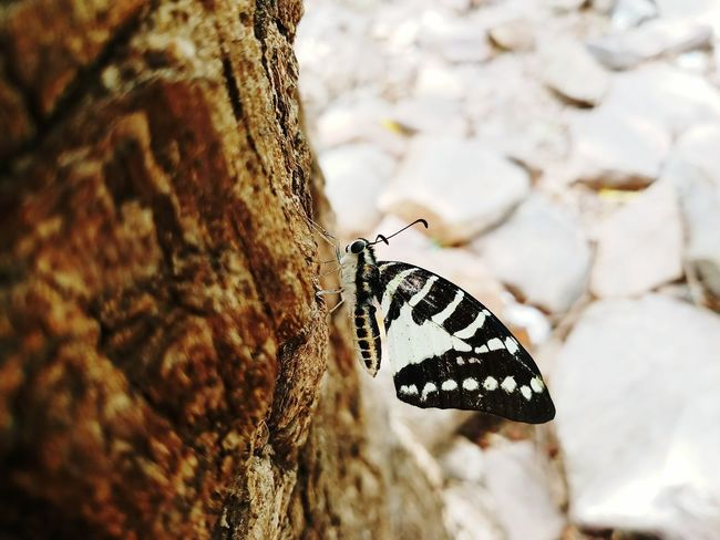 One Animal Animals In The Wild Insect Animal Themes Animal Wildlife Butterfly - Insect Animal Outdoors No People Day Nature Close-up Animal Markings Fragility Perching Beauty In Nature Spread Wings Pet Portraits