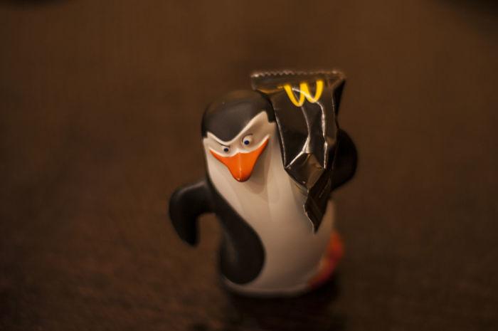 Pingüino Taking Photos Nikon