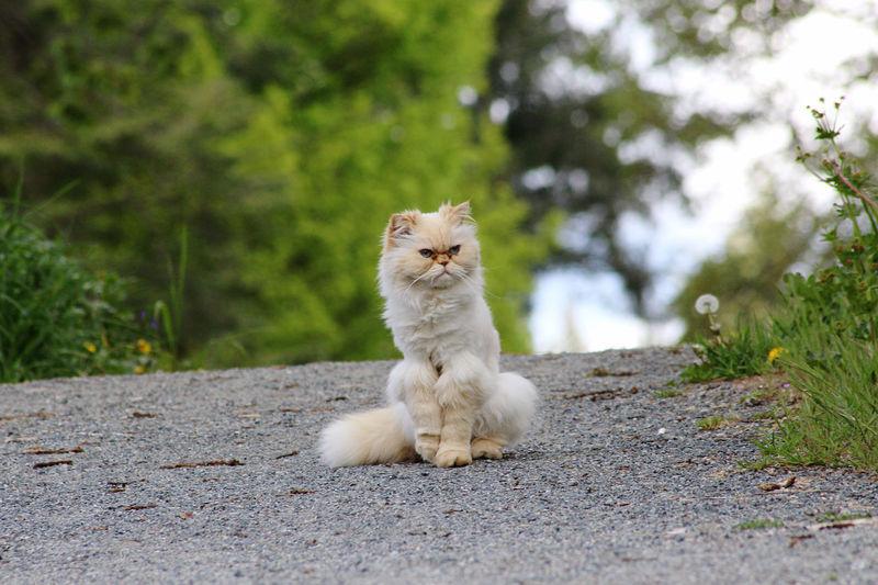 White cat sitting on plant