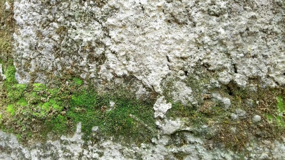 Full Frame High Angle View Backgrounds Day No People Close-up Textured  Green Color Outdoors Nature Grass Concrete Concrete Wall Concrete Texture Concrete Blocks Textured  Textures And Surfaces
