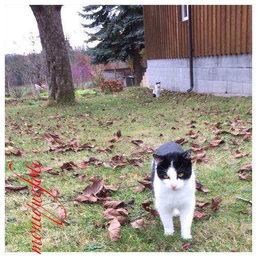 die Bauernhofpussies stehen schon Schlange, wenn ich mit den Leckerli vorbeikomme. 💕💗 Monique52 Katzenliebe Pussycat Pussie Bauernhof Leckerli