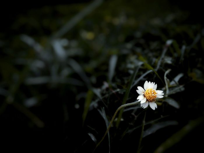 MICRO GOOD LUCK. Taking Photos Cheese! Relaxing Enjoying Life The Best Pic Our Best Pics My Cultures The Best Moments Check This Out Sweet Memories Check This Out EyeEm Nature Lover Hello World Flower Light And Shadow