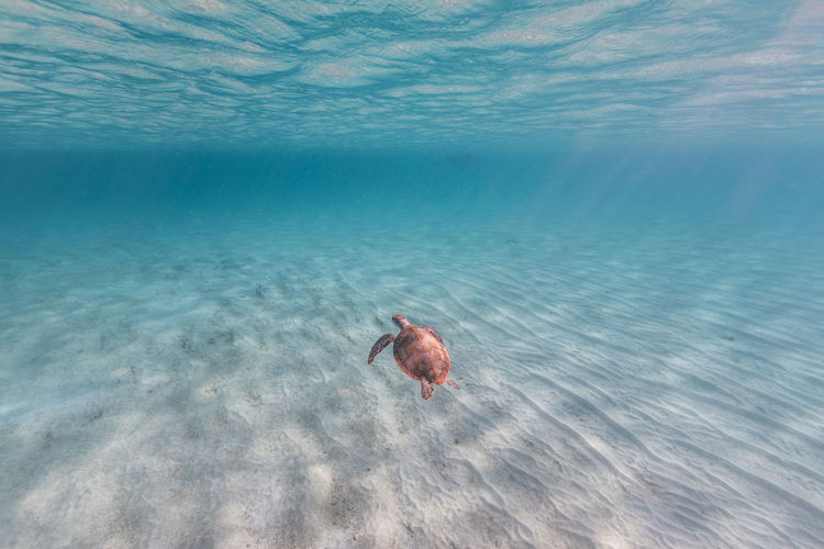 View of crab in sea