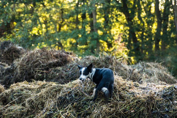 Mammal Animal Themes One Animal Animal Pets Domestic Plant Domestic Animals Vertebrate Land Tree Nature Forest Day Canine Dog No People Field Sitting Focus On Foreground Autumn Mood