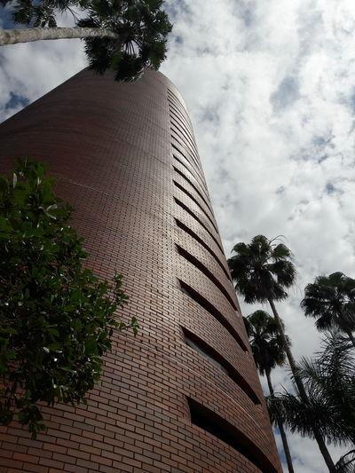 Looking Up Tree Palm Tree Modern Branch Sky Architecture Building Exterior Built Structure Cloud - Sky Office Building Tall - High Urban Skyline Cityscape Downtown District Coconut Palm Tree Tower Treetop Skyscraper Palm Leaf Spire  Financial District  Tropical Tree Communications Tower