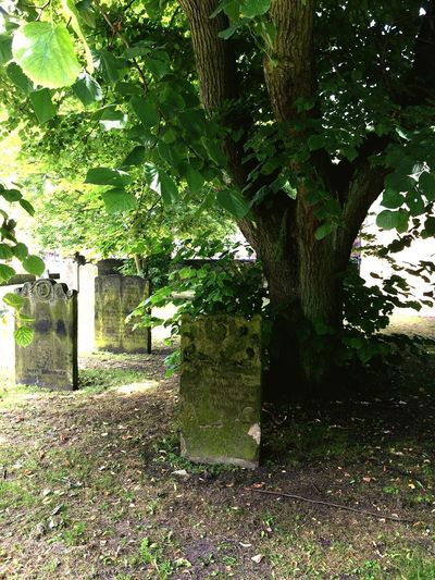 Peaceful Cemetery Walks Darlington  Life And Death