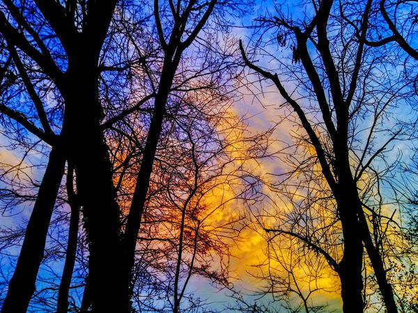 Cloudporn #skyporn #beautiful #bestskysever Clouds And Sky Illuminated Tree Silhouettes Sunset_collection Sky Collection Light Sunshine ☀ Cloud Porn Sunset #sun #clouds #skylovers #sky #nature #beautifulinnature #naturalbeauty #photography #landscape Tree Low Angle View Silhouette Sky Nature Outdoors Day Beauty In Nature