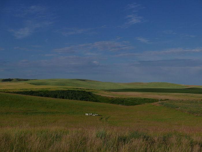 Agriculture Farmland Agricultural Land Farmlandscape Field Grass Landscape Nature No People Scenics Sky Tranquil Scene