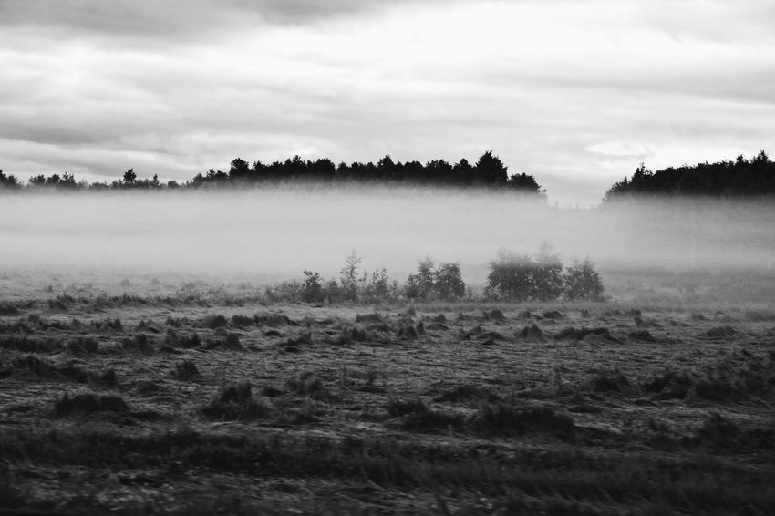Landscape Nature Tranquility Tranquil Scene Sky Tree Scenics No People Beauty In Nature Outdoors Cloud - Sky Day Agriculture Hazy  Growth The Great Outdoors - 2017 EyeEm Awards Rural Scene Misty Mornings Forest Full Frame Foggy Morning Misty Morning Beauty In Nature Nature Fog