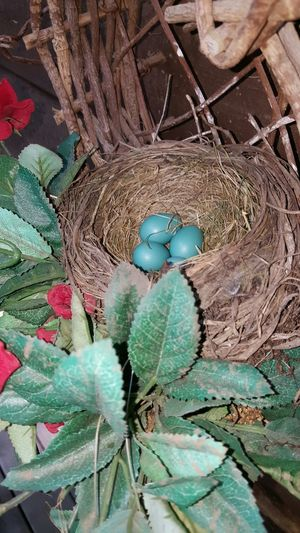 Taking Photos Check This Out Birds Bird Photography Birdwatching EyeEm Birds Bird Eggs Birds_collection