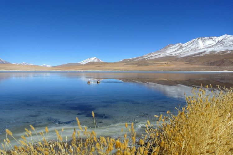 Landscape. Beautiful Bolivia. Travel Reflection Reflections In The Water Lagoon Altiplano Andes Bolivia Uyuni Beauty In Nature EyeEm Best Shots - Nature Landscape_Collection Nature Nature_collection Animal Wildlife Bird Photography Ducks Flamingo Water Mountain Snow Cold Temperature Clear Sky Nature Reserve Lake Rural Scene Snowcapped Mountain Wildflower Uncultivated Thistle Wilderness