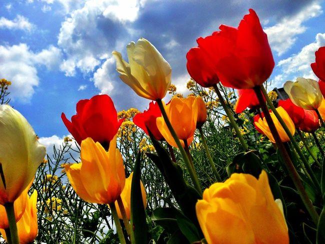Nature Spring Flowers 虫メセン