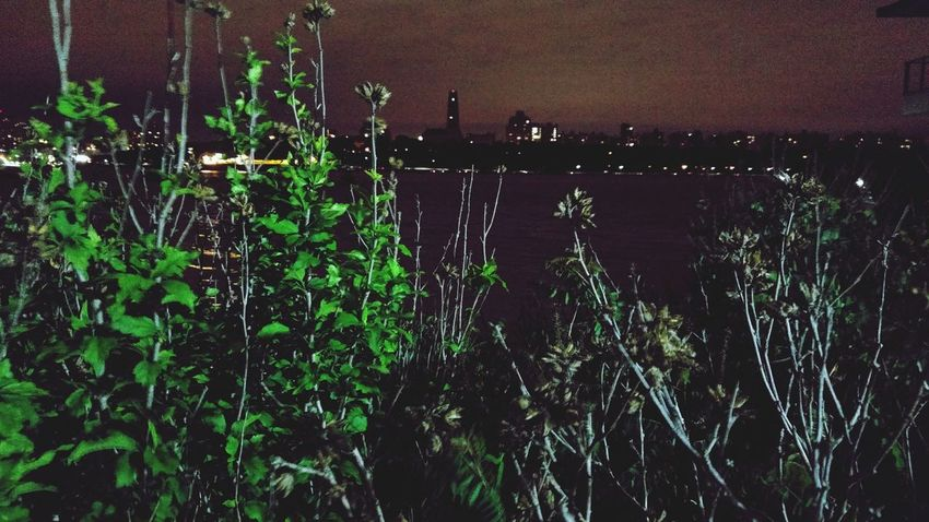 Edgewater NJ New Jersey City Skyline Green Plants Water Edgewater Newjersey Night Nightlife