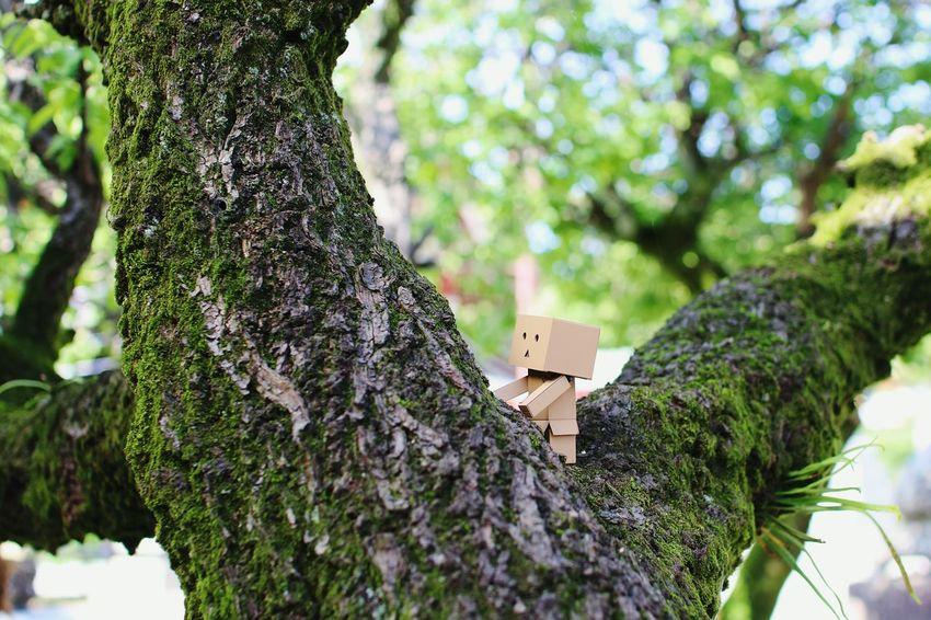 登ってみた。 Danbo EyeEm Gallery Cheese! Shallow Focus Tree Japanese Shrine