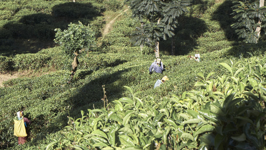 High angle view of farmers working at farm
