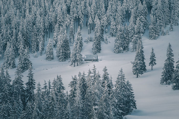Beauty In Nature Cold Temperature Coniferous Tree Covering Day Field Forest Frozen Land Nature No People Non-urban Scene Outdoors Pine Tree Plant Scenics - Nature Snow Tranquil Scene Tranquility Tree Winter WoodLand