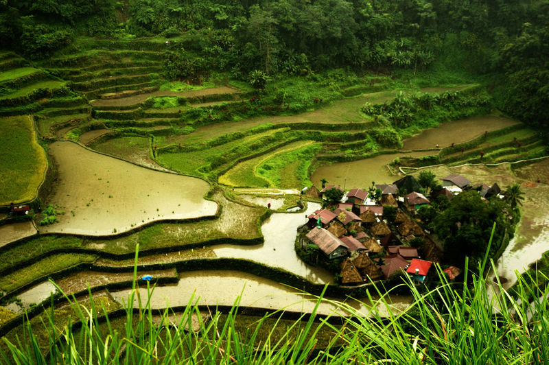 Green Color Luzon Tourist Attraction  Tranquility World Heritage Aerial View Agriculture Ancient Civilization Beauty In Nature Day Farm Field Green Color Landscape Nature No People Outdoors Rice Field Rice Terraces Ricefield Rural Scene Scenics Travel Destinations Village